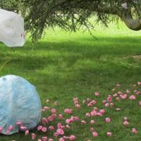 "Rosa ""prince jardinier""... Le petit prince"